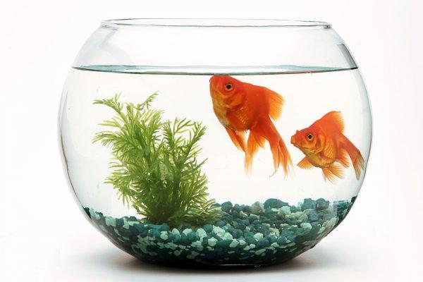 Alasan Kenapa Harus Memelihara Ikan Demi Kesehatan Pikiran